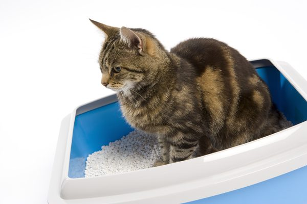 How Long Can a Cat Go Without Urinating