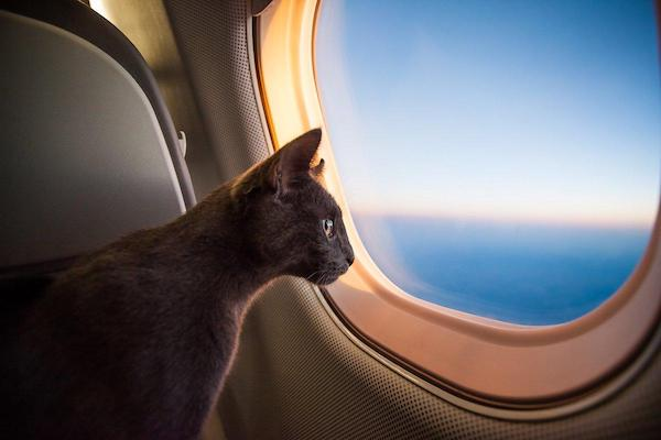 flying with a cat