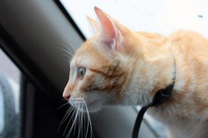 how to make traveling with cats easier