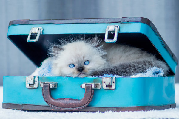 how to move cats across country
