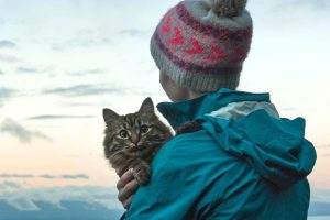 how to travel with a cat