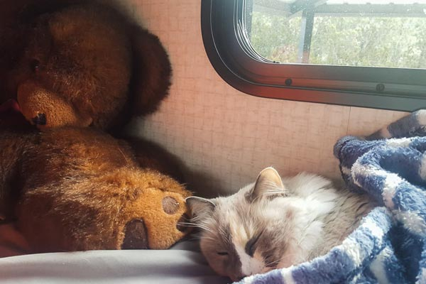 How To Travel With Cats in an RV