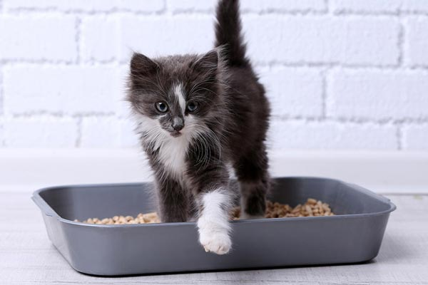 travel kitty litter boxes