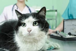 Is Neosporin safe for cats