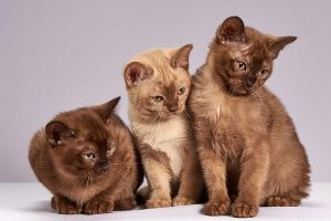 Tips For Moving With Multiple Cats
