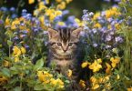 how to keep cats out of flower beds