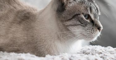 Natural Antibiotics for cats