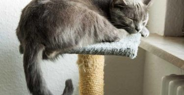 best cat tree for large cats