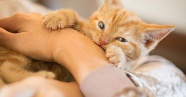 How to Stop Kittens from Biting