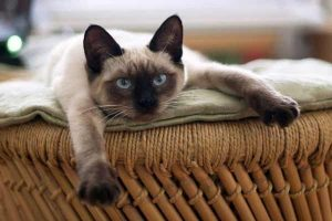 Most Common Health Problems In Cats