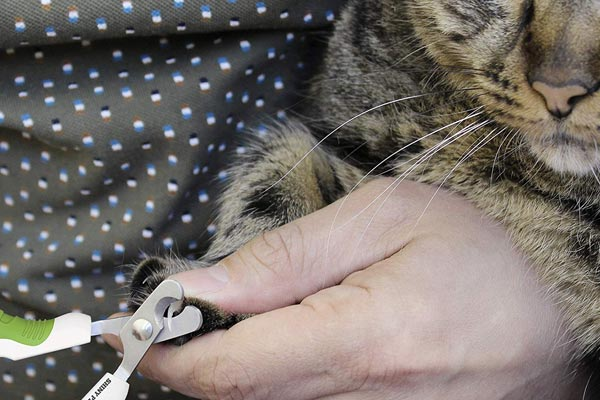Shiney Pet Nail Clippers For Small Animals