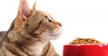 best cat food for allergies
