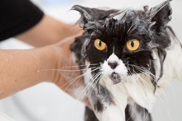 how to bathe a cat that hates water