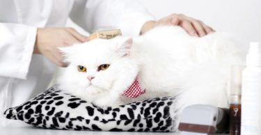 how to sedate a cat for grooming