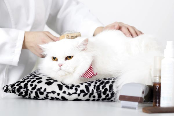 Top 5 Ways to Sedate a Cat for Grooming | Traveling With