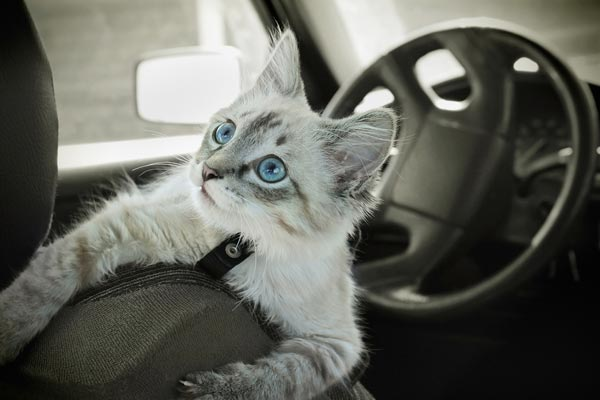 how to travel with a car sick cat