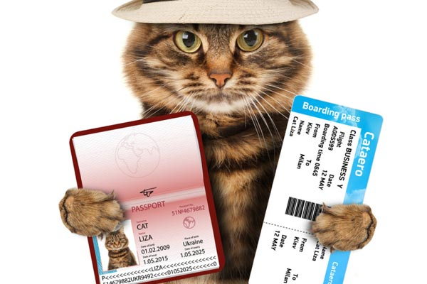 how to travel with a cat internationally