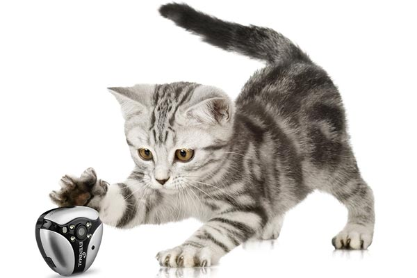 5 Best Cat Collar Cameras