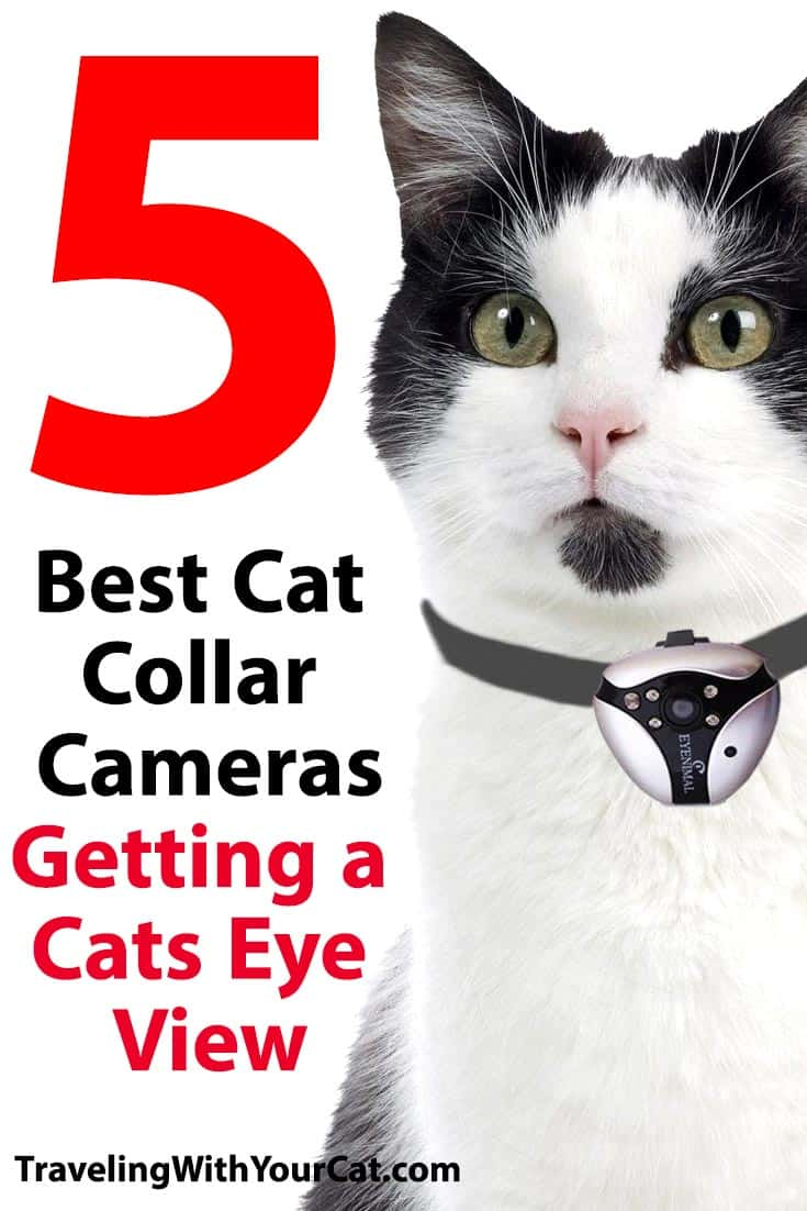 Best Cat Collar Cameras