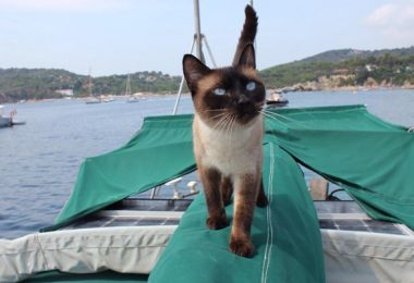 Boating With Cats
