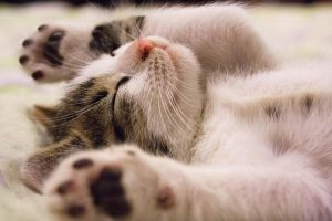 Most Common cat sedative over the counter