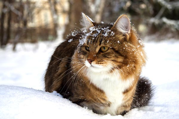 What Temperature Can Cats Tolerate