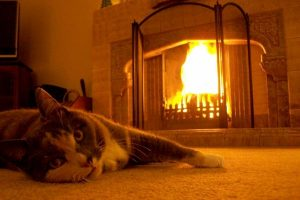 What Temperature Can indoor Cats Tolerate