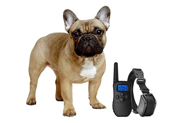 eXuby Shock Collar for Small Dogs