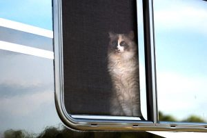how to keep cats from escaping rv