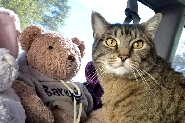 how to travel with a cat in a van