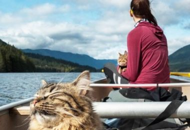 kayaking with cat