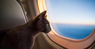 what airlines allow cats to fly in cabin