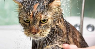 why are cats afraid of water
