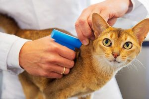 Cat Microchip