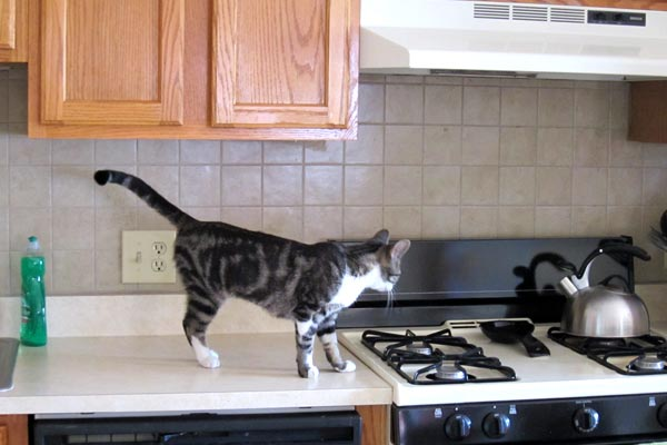 How to Keep Cats Off Counters