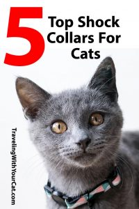 Top Five Shock Collars For Cats