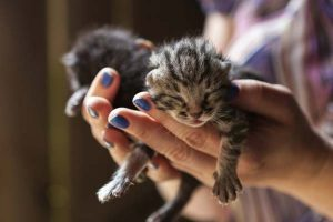 can you touch newborn kittens