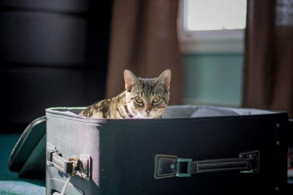 moving overseas with cats