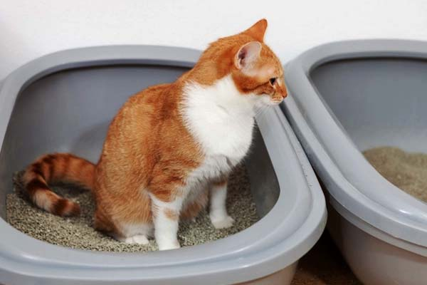how often should cats poop