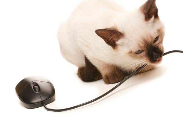 how to keep cats from chewing on cords