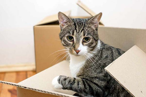 moving cats to new home