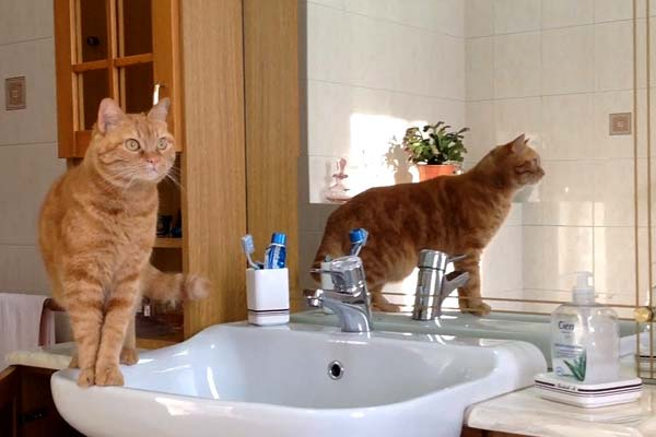 why do cats follow you into the bathroom