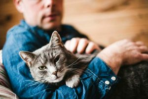 Do Your Cats Miss You When You Travel