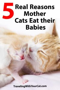 Reasons Mother Cats Eat Their Babies