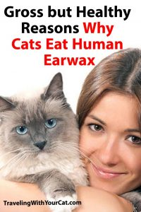 Why Cats Eat Human Earwax