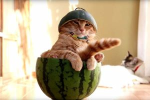 can cat eat watermelon