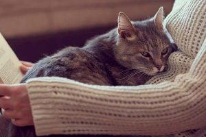do cats know when you are sick