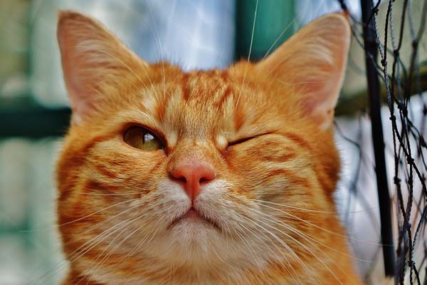 what does it mean when a cat winks at you