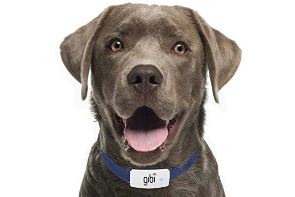 Gibi 2nd Generation Pet GPS Tracker