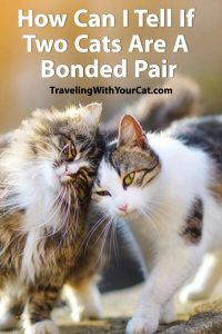 How Can I Tell If Two Cats Are A Bonded Pair